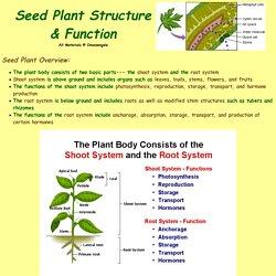 plant structure bi