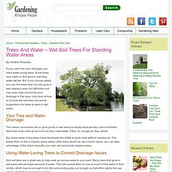 Plant Trees In Wet Areas: Using Water Loving Trees In Poor Drainage Soil
