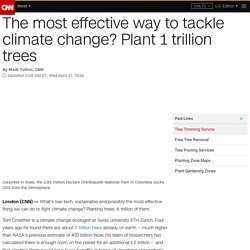 'Plant 1 trillion trees to fight climate change'