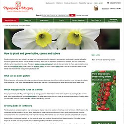 How To Plant & Grow Bulbs, Corms & Tubers