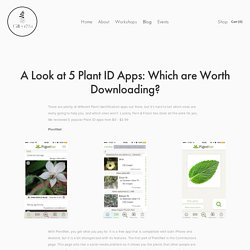 A Look at 5 Plant ID Apps: Which are Worth Downloading? — Fern & Fossil