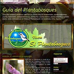 Guía del Plantabosques: BUDDLEIA, EL ARBUSTO DE LAS MARIPOSAS