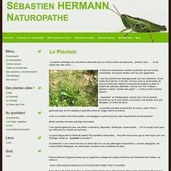 Le plantain,plante comestible et médicinale