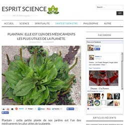 Plantain : une plante miraculeuse de nos jardins.