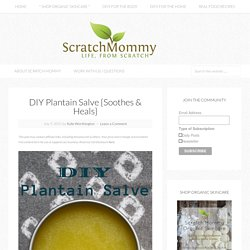 DIY Plantain Salve {Soothes & Heals}
