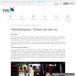 """""""Plantalámparas"""": Plantas que dan luz"""