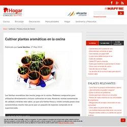 Plantas aromaticas en la cocina - Canal Hogar MAPFRE