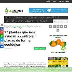 17 plantas que nos ayudan a controlar plagas de forma ecológica