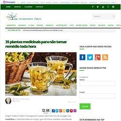 35 plantas medicinais para não tomar remédio toda hora - The Greenest Post