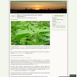 Plantas ornamentales de la risa…Salvia Divinorum ;) « Narelo