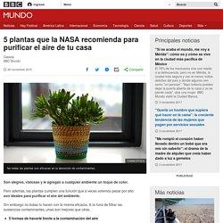 5 plantas que la NASA recomienda para purificar el aire de tu casa - BBC Mundo