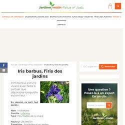 Iris barbus : plantation et conseils d'entretien