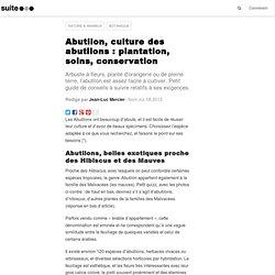 Abutilon, culture des abutilons : plantation, soins, conservation