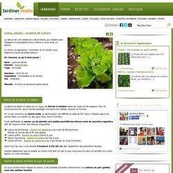 Laitue : semis, plantation, culture et entretien
