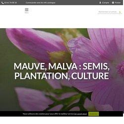 Mauve, malva : semis, plantation, culture - Promesse de Fleurs