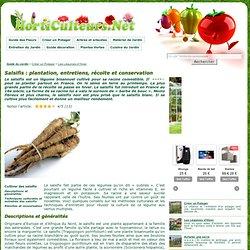 Plantation et entretien des salsifis