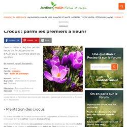 Crocus : plantation, floraison et conseils d'entretien