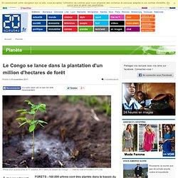 Le Congo se lance dans la plantation d'un million d'hectares de forêt