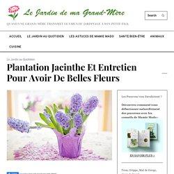 Plantation jacinthe et entretien pour avoir de belles fleurs