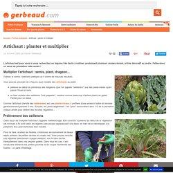Plantation et multiplication de l'artichaut