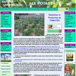 Plantation et production de tomates