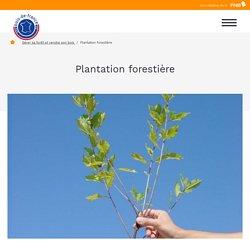 Plantation forêt et reboisement forestier - Préférez le Bois français