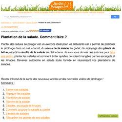 Plantation de salade, comment faire ?