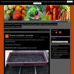 Les tomates - Du semis à la plantation