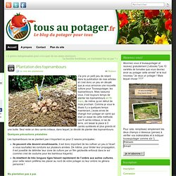 Plantation des topinambours