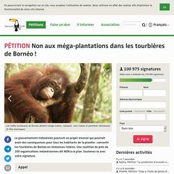 Non aux méga-plantations dans les tourbières de Bornéo !