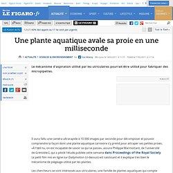 Sciences : Une plante aquatique avale sa proie en une milliseconde