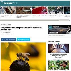 Une plante carnivore pour sauver les abeilles du frelon d'Asie