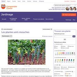 Plante anti-mouche : liste - ComprendreChoisir