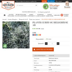 PLANTE CURRY OU HELICHRYSE AB