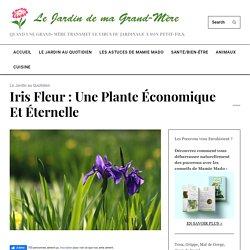 Iris Fleur : Une plante économique et éternelle