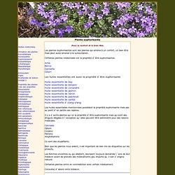 Plante euphorisante