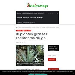 10 plantes grasses résistantes au gel