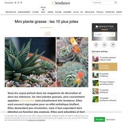 Mini plante grasse: Les 10 plus jolies pour votre déco intérieure