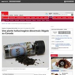 Une plante hallucinogène désormais illégale au Canada