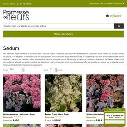 Sedum - Orpin - Plante de soleil et de sol pauvre et calcaire.