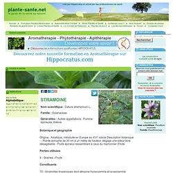Fiche plante : STRAMOINE, Datura stramonium L.