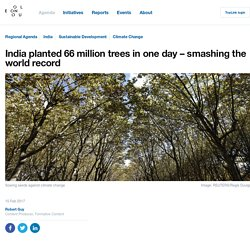 India planted 66 million trees in one day – smashing the world record