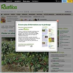 Planter un arbre fruitier pearltrees - Quand planter un arbre fruitier ...