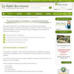 Planter un bambou - Le chatel des vivaces