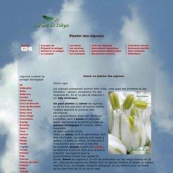 Au potager biologique, semer ou planter des oignons