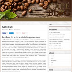 Planter du café - Le café