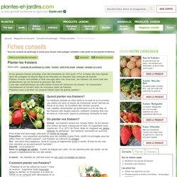 Planter les fraisiers