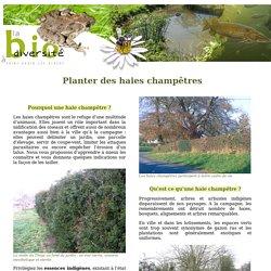 Planter des haies champetres