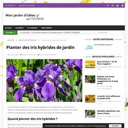 Planter des iris hybrides de jardin