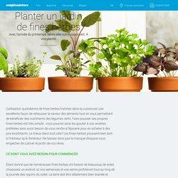 Planter un jardin de fines herbes